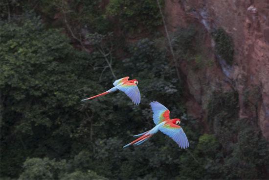 VisitMS - Bonito-Serra da Bodoquena - Jardim - Observação de Aves01