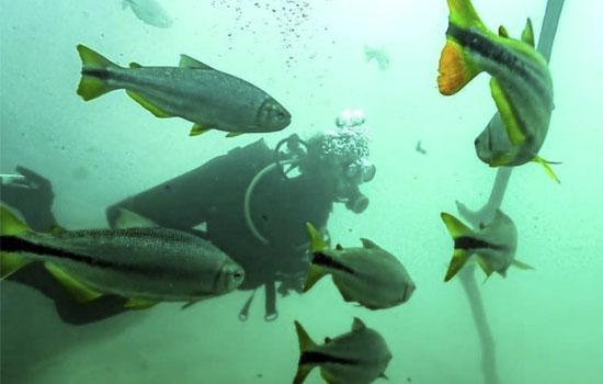 Bonito Scuba - Mergulho com cilindro no Parque Ecológico Rio Formoso Bonito MS Bonito Incomparável