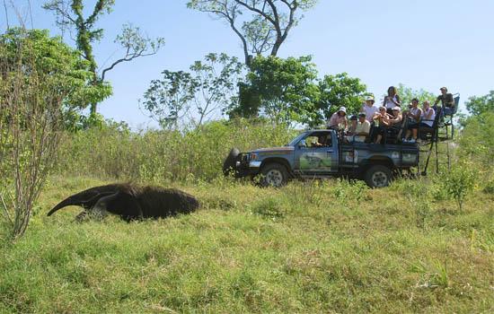 Pantanal - Safári Fotografico - Fazenda San Francisco TRATADA - Heberton Alves I
