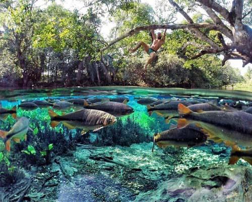 Refúgio da Barra - A natureza do Refúgio da Barra Rio Formoso Bonito MS Bonito Incomparável