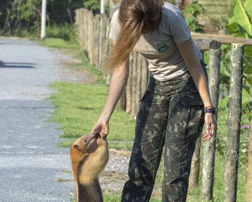 ddg_biopark_bonito_tamandua_mirim_veterinaria_20190209_0076
