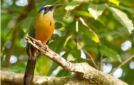 Passeio Estância Mimosa - Udu de coroa azul ave símbolo de Bonito MS