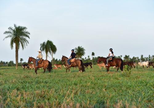 Passeio Recanto Ecológico Rio da Prata - Passeio a cavalo na região da Serra da Bodoquena Foto Divulgação