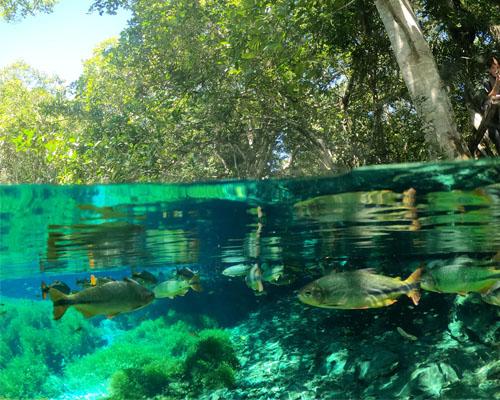 Aquário Natural - Famoso pela quantidade de peixes em suas águas criastalinas