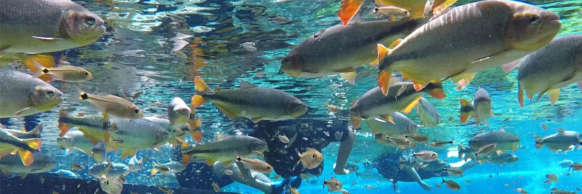 Aquário Natural - Flutuação espetacular entre peixes